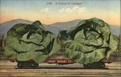 A Carload of Cabbages