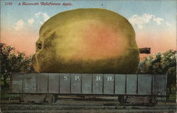 A Mammoth Belleflower Apple.