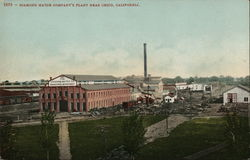 Diamond Match Company's Plant Postcard
