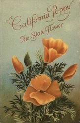 California Poppy the State Flower