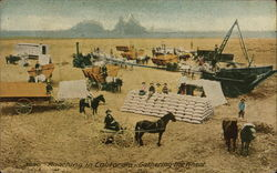 Ranching in California - Gathering the Wheat Postcard