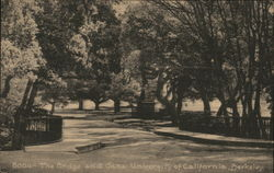 The Bridge and Oaks, University of California