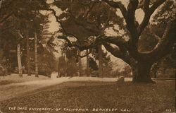 The Oaks, University of California
