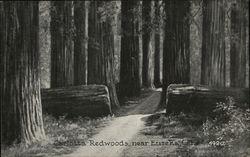Carlotta Redwoods