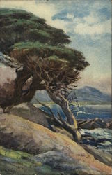 Cypress Trees of 17-Mile Drive