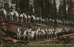 U.S. Cavalry on Fallen Monarch