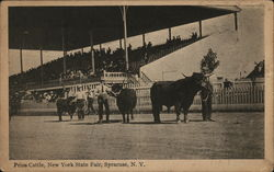 Prize Cattle, New York State Fair