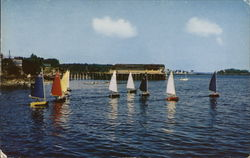 Colorful Sailboats at Camden Harbor Postcard