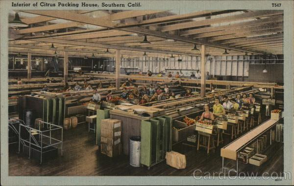 Interior of Citrus Packing House California