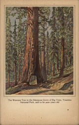The Wawona Tree in the Mariposa Grove of Big Trees, Said to be 4000 Years Old