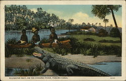 Alligator Bait, on the Cargres River