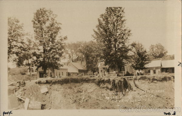 1927 Dr. Johnson's $1000 Maple Tree after Flood Cavendish Vermont