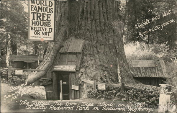 World Famous Tree House - Believe it or Not, Lilly Redwood Park Redcrest California