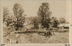 1927 Dr. Johnson's $1000 Maple Tree after Flood