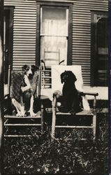 Dogs Sitting on Chairs