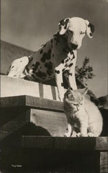 Dalmation and Cat