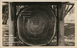 Log Slice Showing Age Rings, Muir Woods National Monument