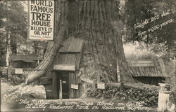 World Famous Tree House - Believe it or Not, Lilly Redwood Park