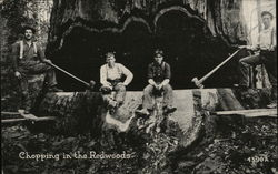 Chopping in the Redwoods