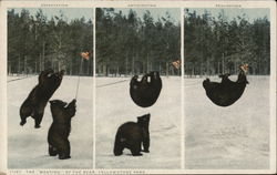 "The ""Meating"" of the Bear, Yellowstone Park"