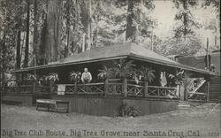 Big Tree Club House, Big Tree Grove