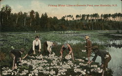Picking Water Lilies at Garretts Pond