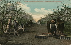 Nova Scotia Orchard Scene: Spraying and Fertilzing