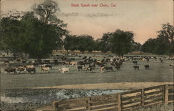 Stock Ranch Postcard