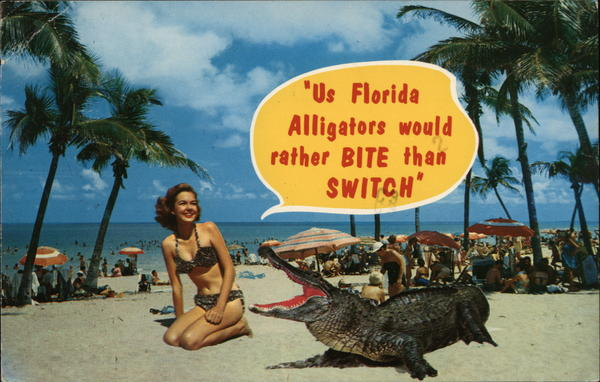 Us Florida alligators would rather bite than switch Miami