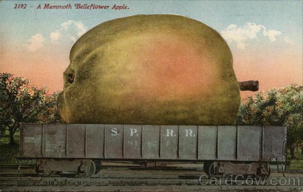 A Mammoth Belleflower Apple Exaggeration