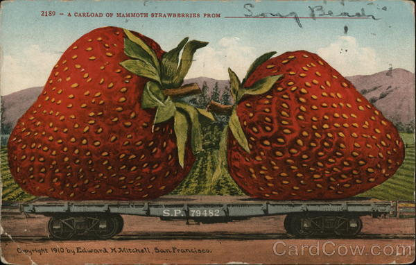 A Carload of Mammoth Strawberries from __ Exaggeration