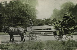 Horses pulling long cart with exaggerated large celery stalk.