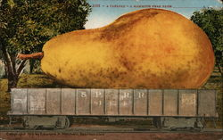 A carload - A Mammoth Pear From ___________