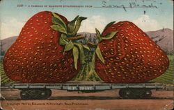 A Carload of Mammoth Strawberries from __