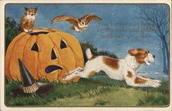 Owls, Jack o'lantern and Dog