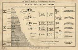 The Evolution of the Horse