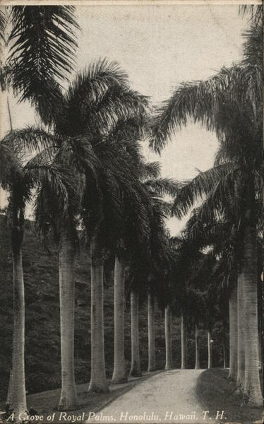 A Grove of Royal Palms Honolulu Hawaii