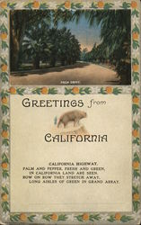 Greetings From California, Palm Drive