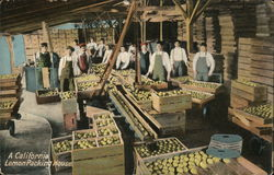 A California Lemon Packing House