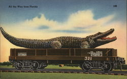All the Way from Florida - Alligator on Railroad Car