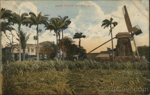 Sugar Estate (Haynes' Hill)