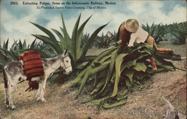 Extracting pulque, scene on the Interoceanic Railway Mexico