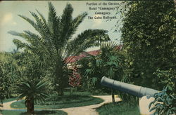 Portion of the Garden, Hotel Camaguey