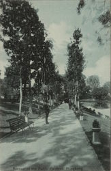 Avenue of the Public Gardens
