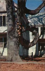 The Famous Doughnut Tree