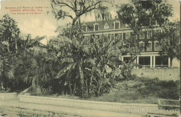 Bananas And Palms At Tarpon Inn Tarpon Springs Florida