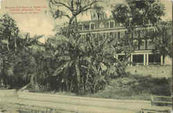 Bananas And Palms At Tarpon Inn