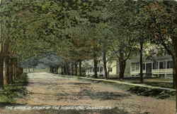 The Grove In Front Of The Homestead