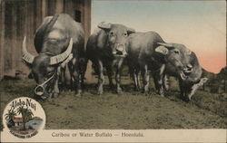 Caribou or Water Buffalo - Aloha Nui