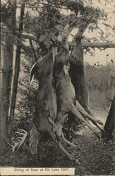String of Deer at Elk Lake 1907